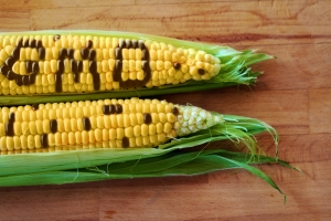 Italy says no to GMO corn, at least for the time being. Take that, Monsanto!