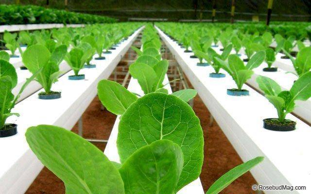Where do your hydroponics plants get their nutrients?