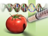 What's going into your food? A new viral gene in GMO foods could be harmful.