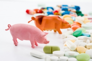 Chemicals fed to pigs and other food animals could be harmful to humans.