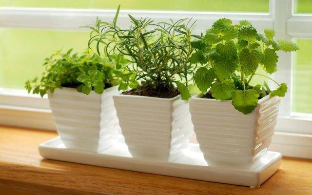Fresh herbs enhance the look and smell of your kitchen.