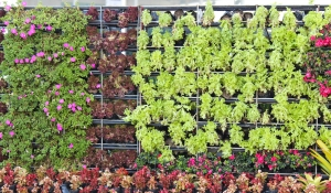 Vertical gardening sends growing skyward.