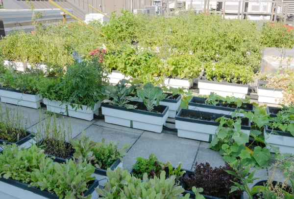 The Swartz family farm is extending its reach to help create urban rooftop gardens in Boston and the Bronx.