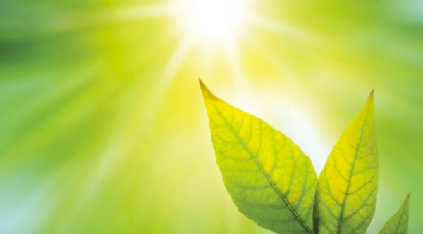 The Bends: Why Do Plants Move Towards Light?
