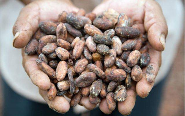 Dry and eat these beans as an aphrodisiac from chocolate heaven