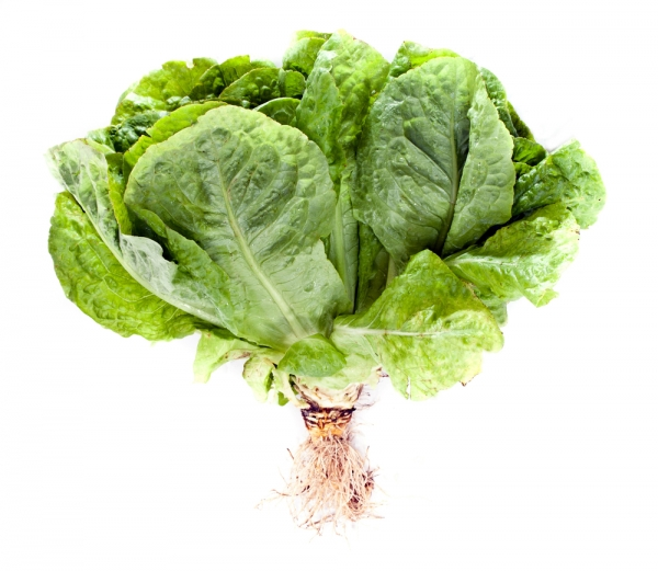 Green Giant will sell hydroponic lettuce with the roots still attached.