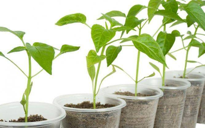 For new growers, soil provides a gentler learning curve than hydroponics.