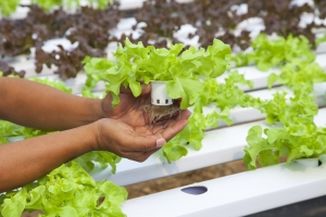 Hydroponic growing is a great way for veterans to transition back to civilian life.